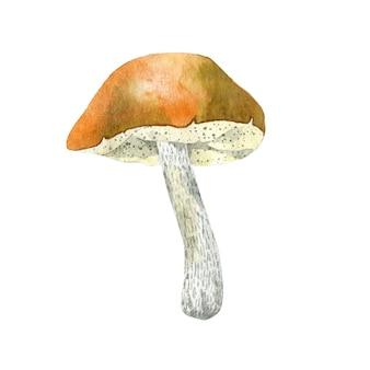 Cogumelo aspen