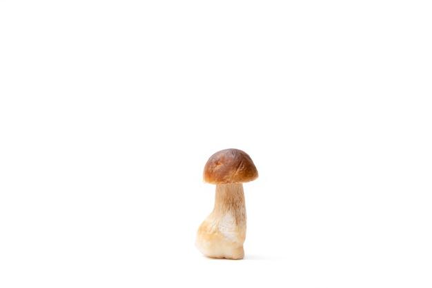 Cogumelo boleto de capa única marrom isolado no fundo branco