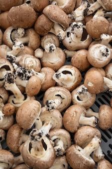 Cogumelo botão marrom a granel com pés de terra