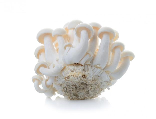 Cogumelo branco isolado