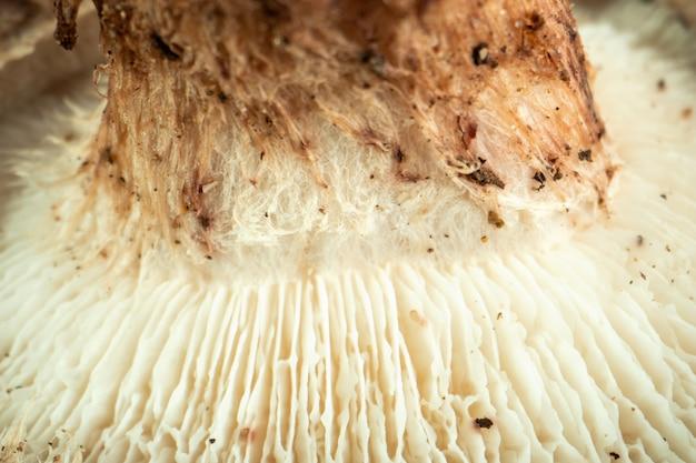 Cogumelo branco olhar mais atento ao champignon branco