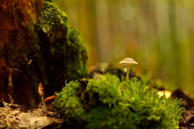 Cogumelo. cogumelos em uma misteriosa floresta escura close-up
