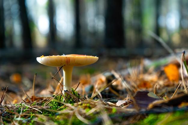 Cogumelo cresce na floresta de manhã