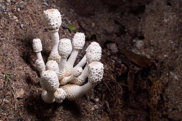 Cogumelo crescendo na floresta natural
