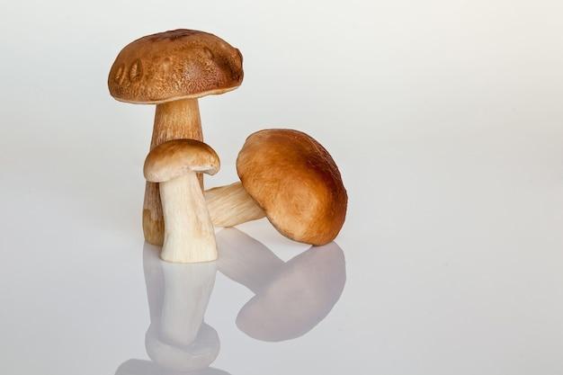 Cogumelo da floresta branco em um fundo branco o outono é a hora de coletar cogumelos da floresta