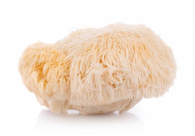 Cogumelo da juba do leão isolado no fundo branco