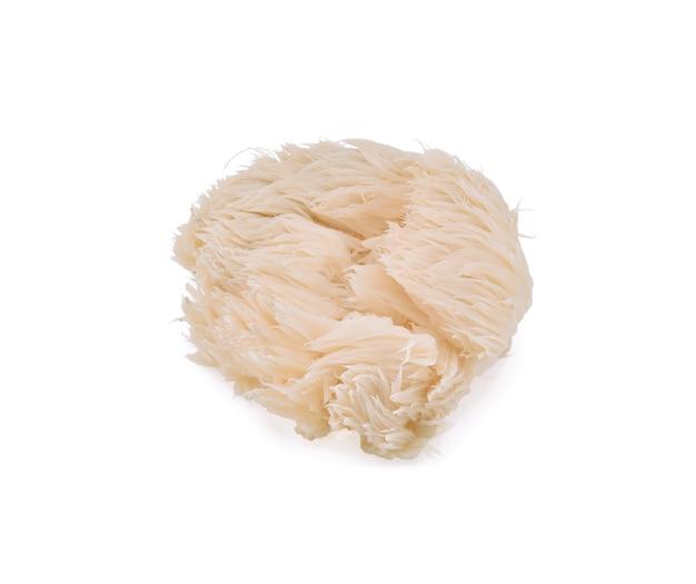 Cogumelo de juba de leão isolado no fundo branco.