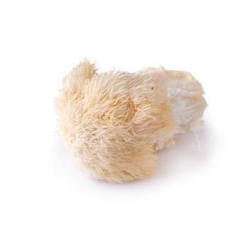Cogumelo de yamabushitake ou cogumelo da juba do leão isolado