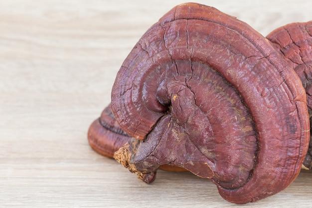 Cogumelo ganoderma lucidum em madeira