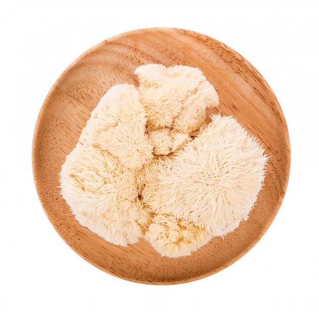 Cogumelo juba de leão isolado no fundo branco