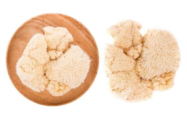 Cogumelo juba leão isolado no fundo branco