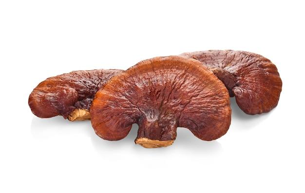 Cogumelo lingzhi, cogumelo reishi tem medicamento de propriedade.