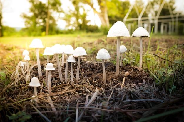 Cogumelo no campo