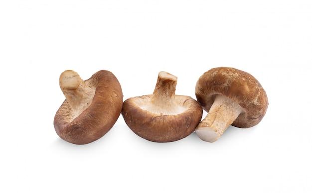 Cogumelo shiitake em fundo branco