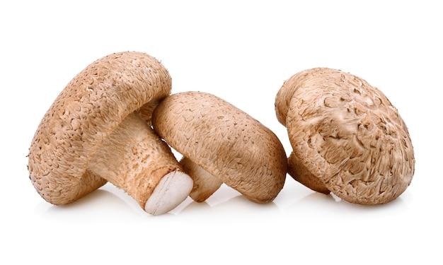 Cogumelo shiitake isolado no branco