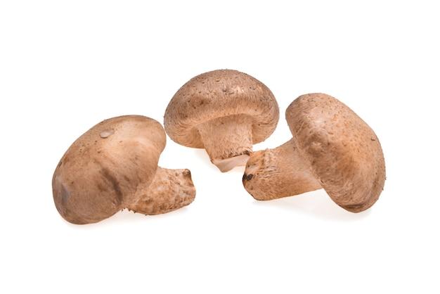 Cogumelo shiitake no fundo branco