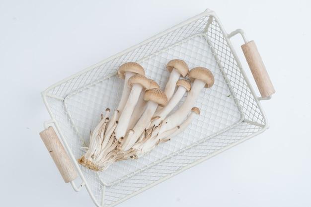 Cogumelo shimeji buna na cesta de malha de arame