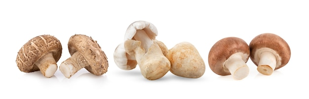 Cogumelo shitake cogumelos palha cogumelos champignon em fundo branco