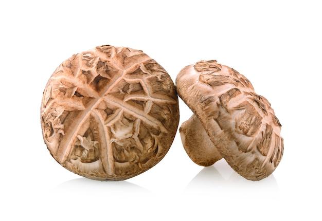 Cogumelo shitake em fundo branco Foto Premium