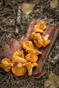 Cogumelos amarelos da prima no fundo de madeira
