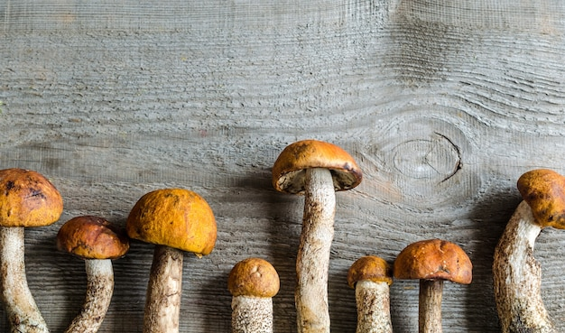 Cogumelos boletus com cobertura laranja