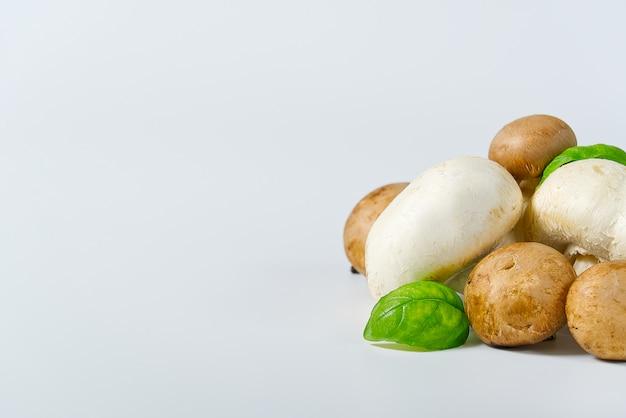Cogumelos brancos e marrons dos cogumelos em um fundo claro. feche o espaço da cópia.