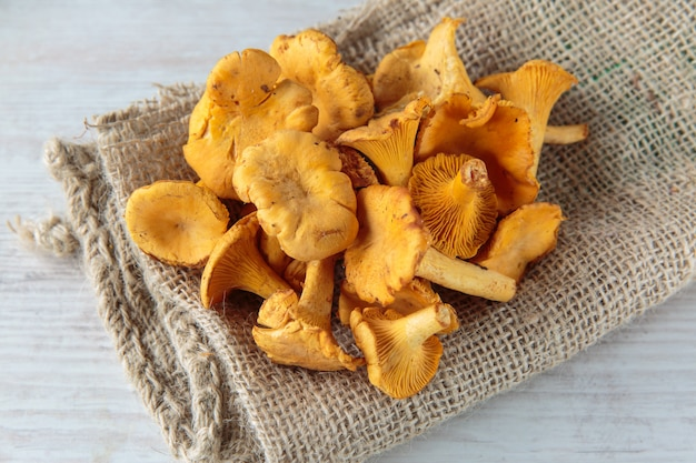 Cogumelos cantharellus