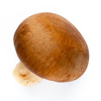 Cogumelos champignon frescos isolados no branco.