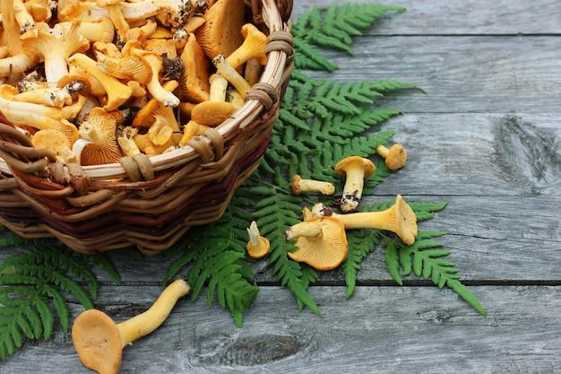 Cogumelos chanterelles em uma cesta na tabela, vista superior.