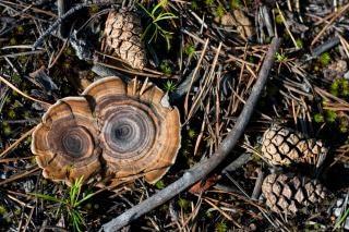 Cogumelos, cogumelo
