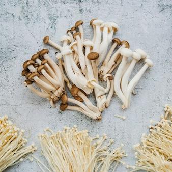 Cogumelos comestíveis organizar no chão