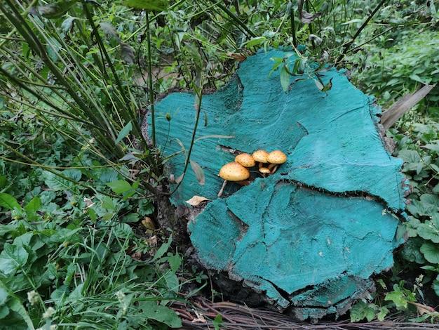 Cogumelos crescem em um toco pintado com tinta