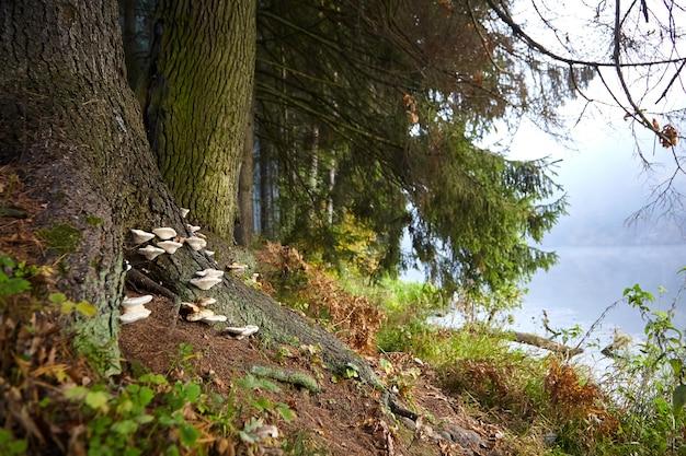 Cogumelos crescendo nas raízes e no tronco de uma árvore