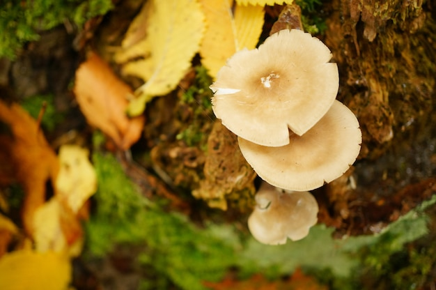 Cogumelos crescendo no solo cercado por folhas amarelas secas