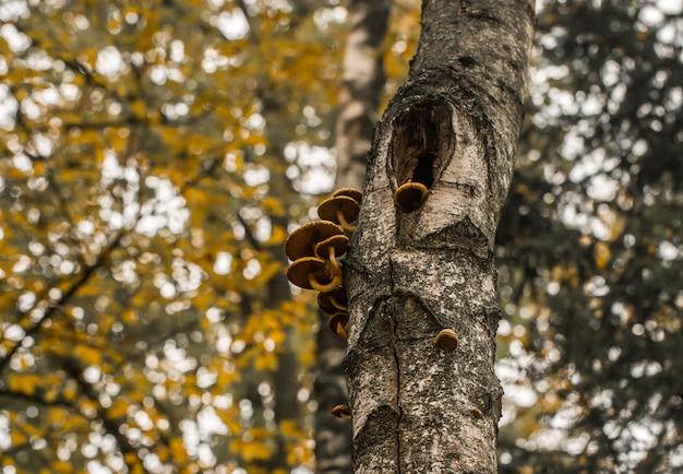 Cogumelos de outono bonitos em uma árvore