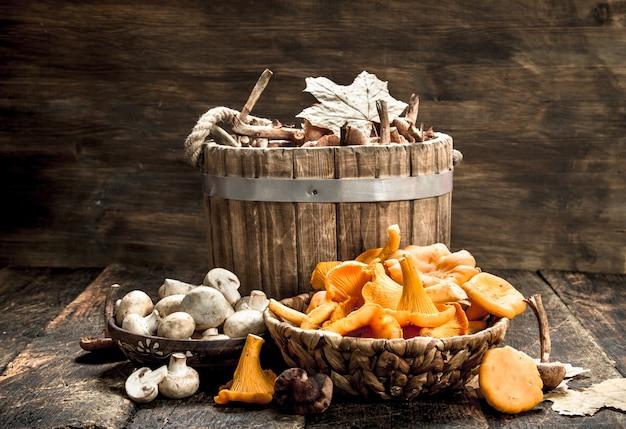 Cogumelos de outono diferentes