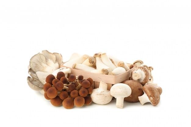 Cogumelos diferentes e recipiente isolado no branco