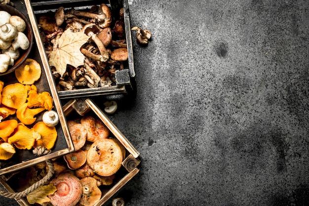 Cogumelos diferentes em caixas