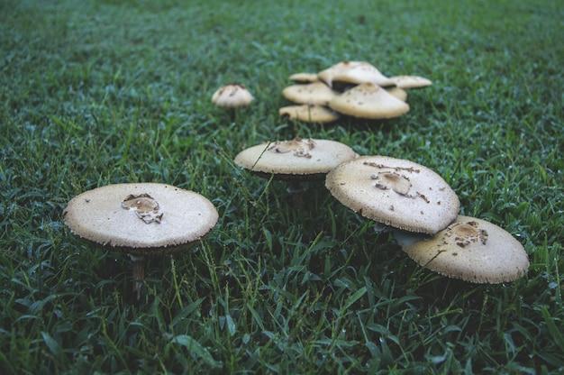 Cogumelos em um gramado