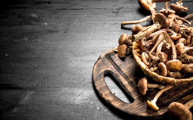 Cogumelos frescos com mel agarics na cesta