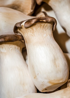 Cogumelos frescos e apenas colhidos para vendas