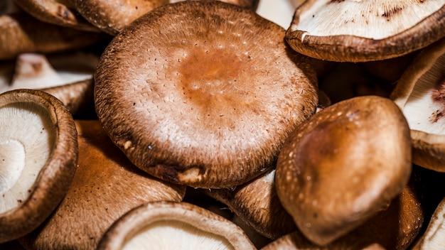 Cogumelos frescos e saudáveis à venda
