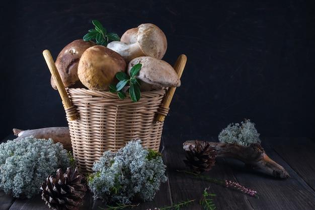 Cogumelos frescos na cesta, boletos colhidos na floresta na superfície de madeira escura