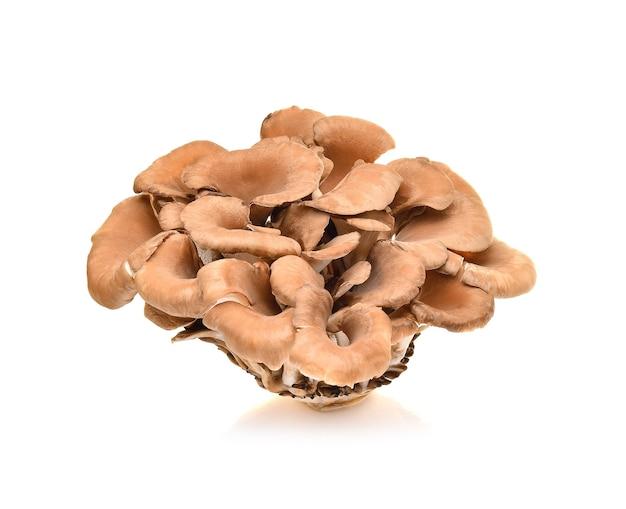 Cogumelos maitake isolados no branco
