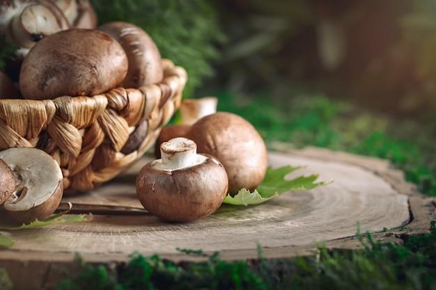 Cogumelos marrons em uma cesta no tronco de uma árvore
