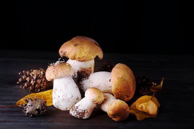 Cogumelos na floresta.