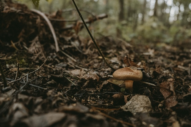 Cogumelos no musgo na floresta