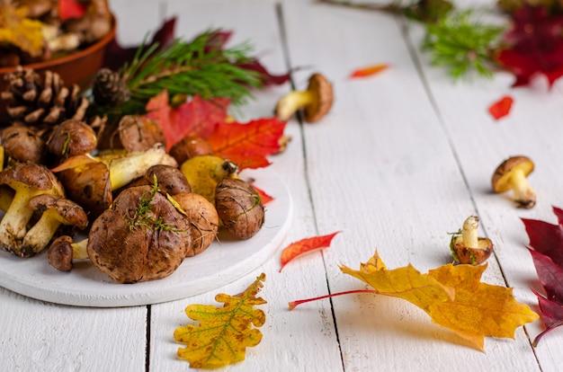 Cogumelos oleosos comestíveis selvagens sobre fundo branco de madeira, com espaço para texto