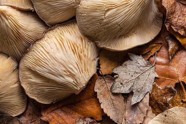 Cogumelos orgânicos de vista superior