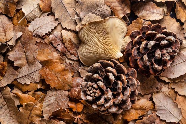 Cogumelos orgânicos e folhas de cima